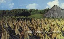 far001521 - Harvesting Tobacco Farming Postcard Post Card