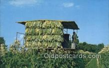far001524 - Harvesting Tobacco Farming Postcard Post Card