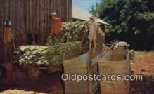 far001542 - Filling Tobacco Barn Farming Postcard Post Card