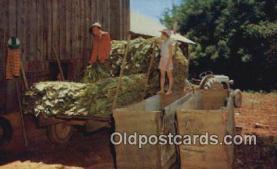 Filling Tobacco Barn