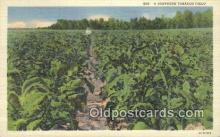 far001555 - Southern Tobacco Field Farming Postcard Post Card