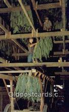 Amish Farm & House
