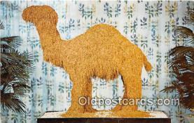 Old Joe, Camel Cigarettes 1913