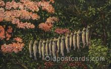 fis001019 - Fishing Postcard Post Card