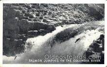 fis001089 - Columbia River, Salmone, Fishing Postcard Post Card