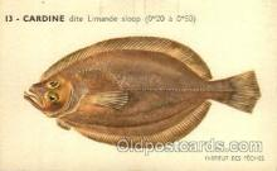 fis001120 - Cardine Fish Fishing Postcard Post Card