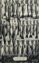 fis001133 - Ocean City, Md., USA Fish Fishing Postcard Post Card