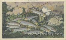 fis001172 - Fishing Postcard Post Card