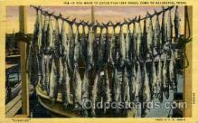 fis001248 - Kingfish, Galveston,Texas,USA Fishing Postcard Post Card