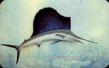 fis001269 - Sailfish Fishing Postcard Post Card