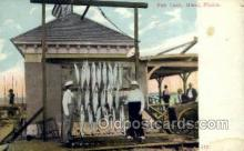 fis001312 - Miami FL, Uaa Fishing Old Vintage Antique Postcard Post Card