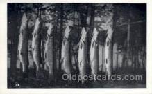 fis001387 - Fishing Old Vintage Antique Postcard Post Card