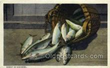 fis001419 - Mackeral Fishing Old Vintage Antique Postcard Post Card