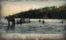 fis001499 - Shad Seining with Horses Fishing Old Vintage Antique Postcard Post Card
