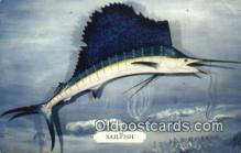 fis001552 - Sailfish  Postcard Post Cards Old Vintage Antique