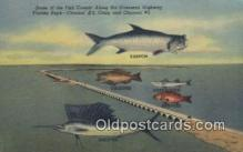 fis001564 - Fish Caught, Overseas Highway Florida Keys, USA Postcard Post Cards Old Vintage Antique