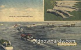 fis001566 - Tarpon Fishing Texas, USA Postcard Post Cards Old Vintage Antique