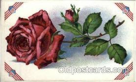 flr001064 - Flower Postcard Post Card