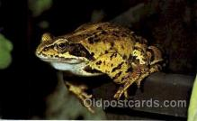 frg158 - Frog Frogs Postcard Post Card
