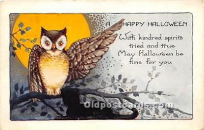 Owl, Black Cat