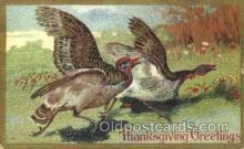 hol060066 - Thanksgiving Postcard Postcards