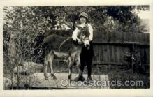 hor000015 - Real Photo  Horse Horses, Postcard Postcards