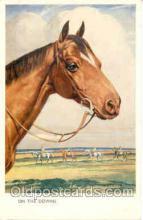 hor001054 - Horse Horses Postcard Postcards