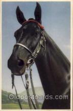 hor001123 - Artist Signed Alfred Mainzer Horse Postcard Postcards
