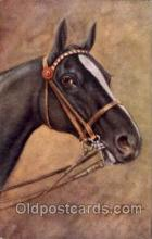 hor001125 - Artist Signed George Rankin Horse Postcard Postcards