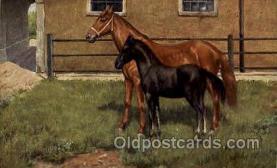 hor001155 - Horse, Horses, Postcard Postcards