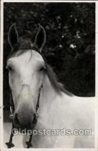 hor001169 - Horse, Horses, Postcard Postcards