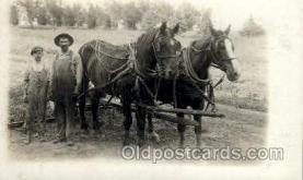 hor001171 - Horse, Horses, Postcard Postcards