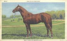 hor001174 - Man O' War Horse Postcard Postcards