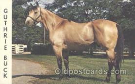 hor001176 - Guthrie Buck Horse Postcard Postcards