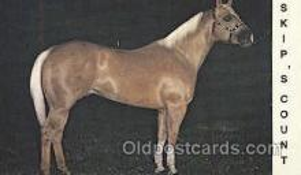 hor001180 - Skip's Count Horse Postcard Postcards