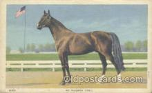 hor001183 - Mr. McElwyn Horse Postcard Postcards