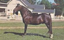 hor001184 - Morgan Horse Postcard Postcards