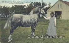 hor001186 - One of Our Farmers Heavyweights Horse Postcard Postcards