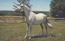 hor001187 - White Stallion Horse Postcard Postcards