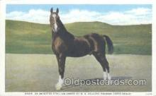 hor001188 - Nask, Imported Stallion Horse Postcard Postcards
