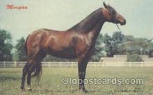 hor001191 - Morgan Horse Postcard Postcards