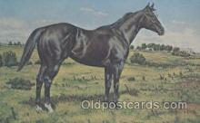 hor001197 - Diamond Charge Horse Postcard Postcards