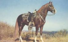 hor001198 - Hoss Horse Postcard Postcards