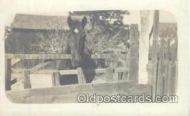 hor001199 - Horse Postcard Postcards