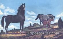hor001202 - Painting by Vern Parker Horse Postcard Postcards