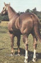 hor001209 - Mack By Bar AQHA Champion Red Roan Horse Postcard Postcards