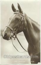 hor001211 - Horse Postcard Postcards