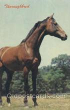 hor001219 - Thouroughbred Horse Postcard Postcards