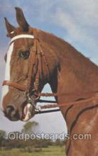 hor001227 - Horse Postcard Postcards