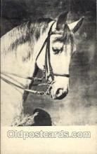 hor001271 - Old Vintage Antique Postcard Post Card